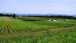 Polyculture Plante