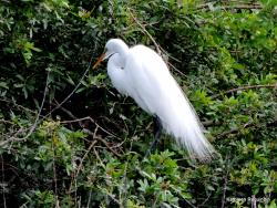 Venice Area Audubon Society