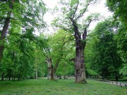 Nationales Naturmonument Ivenacker Eichen
