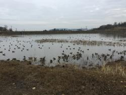 Tajiri Pond