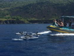 Sea Quest Snorkel Tours