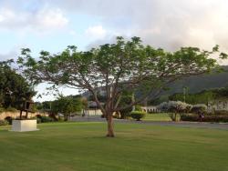 University Of The West Indies - Mona