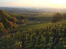 Ferienwohnung Weingut Ilmbacher Hof