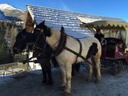 Pferdeschlittenfahrt am Katschberg