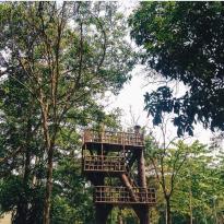 Alam Mayang