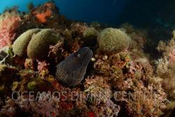 Oceanos Diving Center