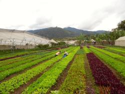 Caoba Farms