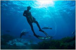 Underwater Safaris