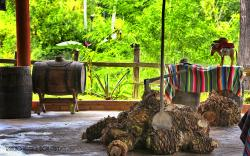 Rancho Verano Distileria de Tequila