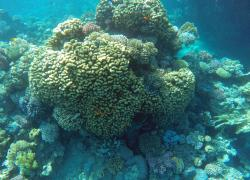 Red Sea Coral Reef Snorkeling at Ras Mohamed National Park with Lunch