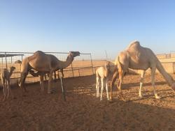 Sahara Pak