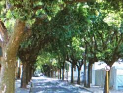 Rua 5
