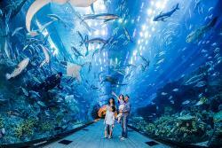 دبي أكواريوم وحديقة الحيوانات