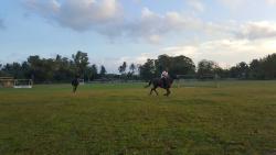 Assakaf Equine Centre