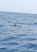 Delfin- & Walbeobachtung