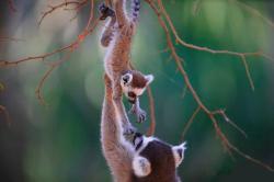 Madagascar Tropic Voyage