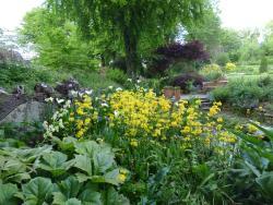 Llwyngarreg Garden
