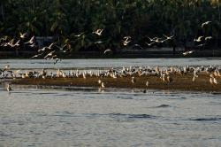 Kadalundi Bird Sanctuary