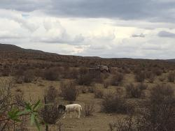 Majestic Karoo Experience!