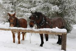 Happy Trails Horse Adventures