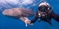 Downbelow Marine & Wildlife Adventures - Day Tours