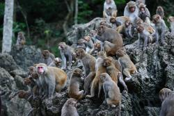 A natural habitat of Monkeys