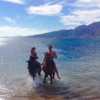 Dahab Horse Riding Club