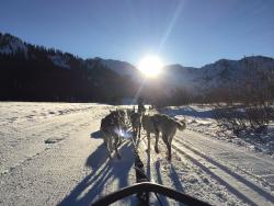 Wilderness Adventures Dog Sled Tours