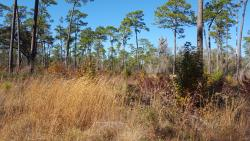 Chinsegut Wildlife and Environmental Area