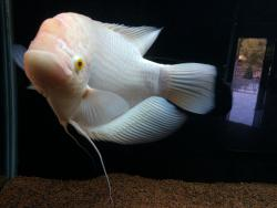 Karwar Aquarium