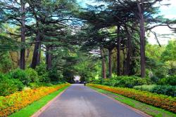 菲茨罗花园