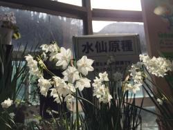 Echizen Suisen no Sato Park