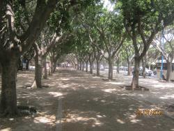 アラブ連盟公園のことです。