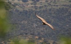 Birding Naturaleza