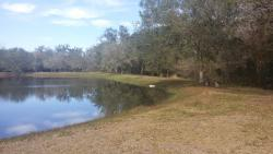 Pond on the retreat property. Note alligator on the grass (mid-picture).