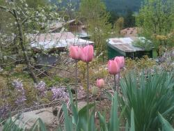 Tulips and lavender in garden