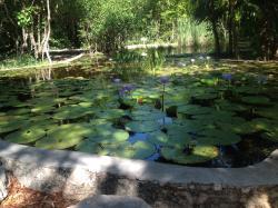 Jardin Botanico Regional Roger Orellana