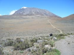 Majestic Kilimanjaro Treks and Safaris