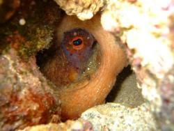 Vasiliadis Diving Club
