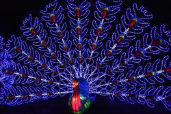 Magical Lantern Festival example