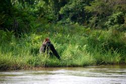 Réserve Naturelle de Gorilles de Lésio-Louna-Léfini