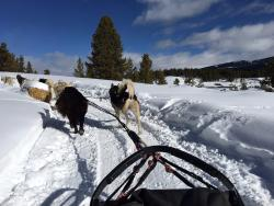 Winterhawk Dog Sled Adventures