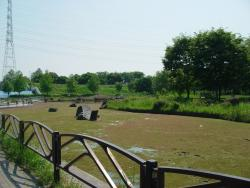 Fukakita Green Parks