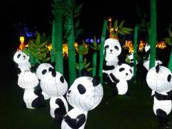 Pandas at the Magical Lantern Festival