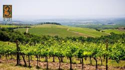 3 Vines Winery