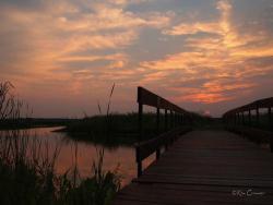 Goose Pond Fish and Wildlife Area