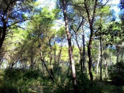 Bosco della Correggia