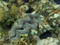 Exploration Sous Marine