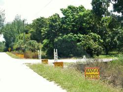 Promised Land Mangoes