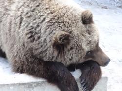 Zoo, baza otdykha Sosnoviy Bor